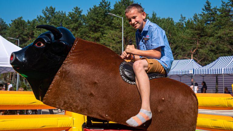 Byk rodeo - 08